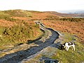 Farm track - geograph.org.uk - 1099433.jpg