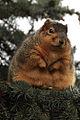 Fat Boy (295343848).jpg