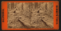 Father of the Forest, 460 feet long, 37 feet in diameter, 112 feet in circumference, from Robert N. Dennis collection of stereoscopic views.png