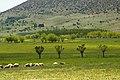 Faules-Feld Argon-Pedion Arcadia Peloponnese.jpg