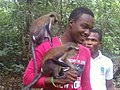 Feeding Mona Monkeys at Tafi Atome Monkey Sanctuary 05.jpg