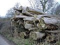 Felled trees - geograph.org.uk - 355140.jpg