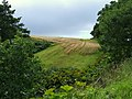 Field Craigmill Den, Panbride - geograph.org.uk - 527373.jpg