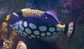 Fish 2 (6246925421).jpg
