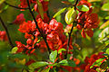 Flickr - Laenulfean - red and green in perfect unison.jpg