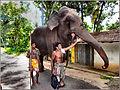 Flickr - ronsaunders47 - A MAN'S BEST FRIEND IN SRI LANKA..jpg