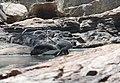Flora and fauna of Chinnar WLS Kerala India (31).jpg