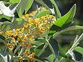 Flores en el Jardín Botánico de Viña del Mar 22.JPG