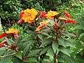 Flores laranjas.jpg