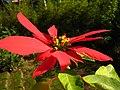 Flower (356383357).jpg