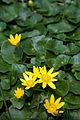 Flowers (2425723494).jpg