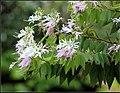 Flowers (6974276483).jpg