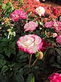 Flowers - Uncategorised Garden plants 244.JPG