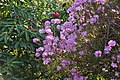 Flowers at Cockington Court (3046).jpg