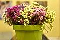 Flowers in a green pot.jpg