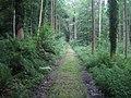 Fonthill Abbey Wood - geograph.org.uk - 914372.jpg