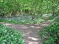 Footpath junction in Shipbourne Wood - geograph.org.uk - 1293011.jpg