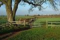 Footpath near Knowle Farm - geograph.org.uk - 286620.jpg