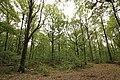 Forêt Départementale de Méridon à Chevreuse le 29 septembre 2017 - 36.jpg