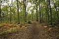 Forêt Départementale de Méridon à Chevreuse le 29 septembre 2017 - 41.jpg