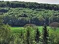Forêt de Marchaux (25).jpg