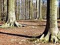 Forêt de Soignes ---.jpg