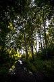 Forest - panoramio (60).jpg