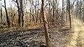 Forest Fire @ Wayanad Wildlife Sanctuary, Muthanga Range - panoramio (16).jpg