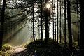 Forest Sunlight (6781015287).jpg