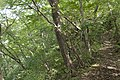 Forest in Mt.Kagoiwa 01.jpg