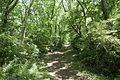 Forest in Mt.Nandai 08.jpg