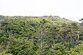 Forest in Yatsugatake 15.jpg