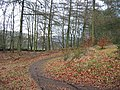 Forest path - geograph.org.uk - 120513.jpg