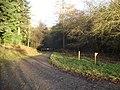 Forest track near Meeroak Farm - geograph.org.uk - 655121.jpg