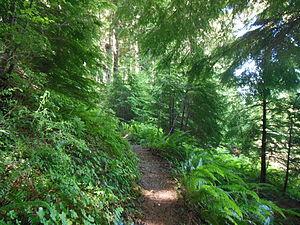 Umpqua National Forest - A trail through dense vegetation in the forest