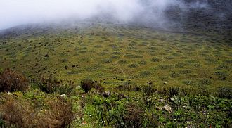 Mount Kenya - Frost heaving causes patterned solifluction lobes below Mugi Hill.