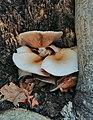 Funghi in cavità d'albero .jpg