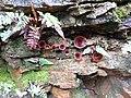 Fungi Annandale.jpg
