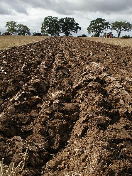 File:Furrows, ploughed field.jpg