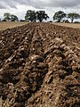Furrows, ploughed field.jpg