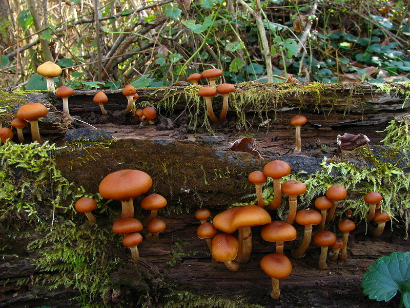 Most Decomposers Make Their Own Food Through Photosynthesis