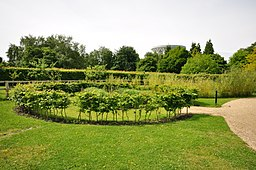 Garden at Jodrell Bank (5455)