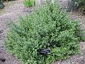 Gardenology-IMG 4962 hunt10mar.jpg