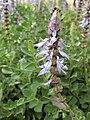 Gardenology.org-IMG 5146 hunt0904.jpg