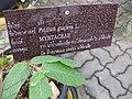 Gardenology.org-IMG 7815 qsbg11mar.jpg