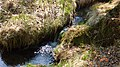 Gelobtbachtal, údolí Klopotského potoka - panoramio (17).jpg