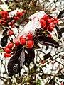 Georgia snow IMG 4300 (38887924702).jpg