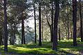 Gezer 261215 HaMeginim Wood 01.jpg