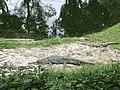 Gharials, zoo.jpg