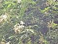 Giardino di Ninfa 145.jpg